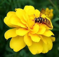 חברה של הדבורה